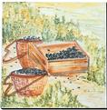 Carrelage - Décoration - Cueillette olive C- Motif - Design - Faïence de Provence à Salernes