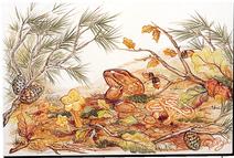 Carrelage - Décoration - Champignon- Fresque - Tableau - Faïence de Provence à Salernes