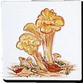 Carrelage - Décoration - Champignons - Motif - Design - Faïence de Provence à Salernes