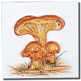Carrelage - Décoration - Champignons- Motif - Design - Faïence de Provence à Salernes