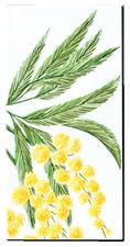 Carrelage - Décoration - Flore - Mimosa - Motif - Design - Faïence de Provence