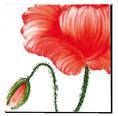 Carrelage - Décoration - Flore - Coquelicot - Motif - Design - Faïence de Provence