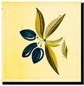 Carrelage - Décoration - Olive - Motif - Design - Faïence de Provence à Salernes