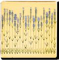 Carrelage - Décoration - Frise Senteur de Provence Lavande- Motif - Design - Faïence de Provence à Salernes