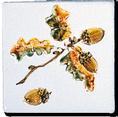 Carrelage - Décoration - Decor 11 Chêne - Motif - Design - Faïence de Provence à Salernes