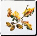Carrelage - Décoration - Décor 11 Feuille de chêne - Motif - Design - Faïence de Provence à Salernes
