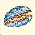 Carrelage - Décoration - Coquillage - Motif - Design - Faïence de Provence à Salernes